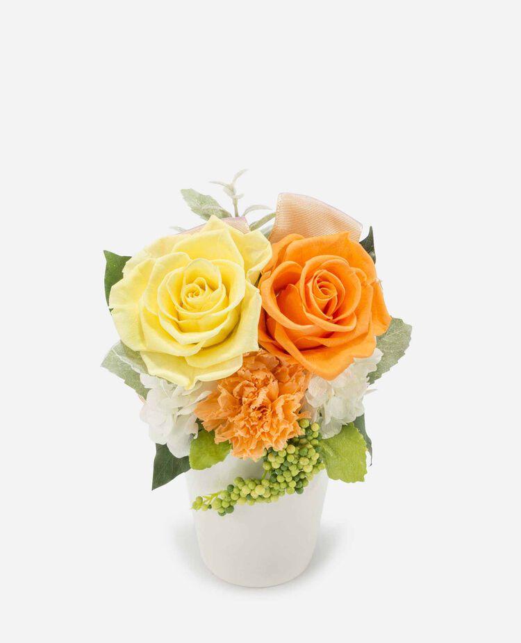 バラとリボンのアレンジメント プリザーブドフラワー ベル・フルール / Belles Fleurs